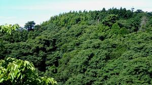 Kamakuraen1