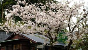 Gokurakuzi